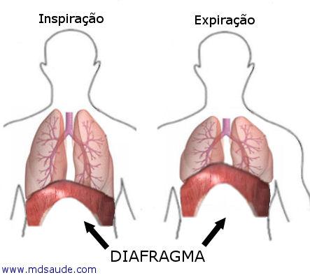 diafragma.pg
