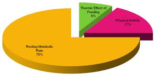 gasto-calorico-diario